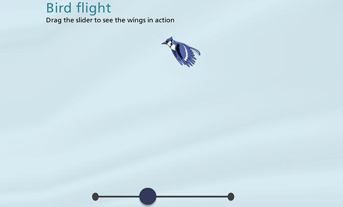 Slider Bird Flight