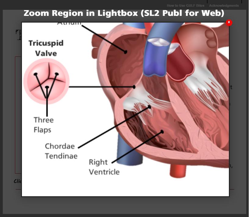 SL2 Published to Web with HTML5 Resized Window
