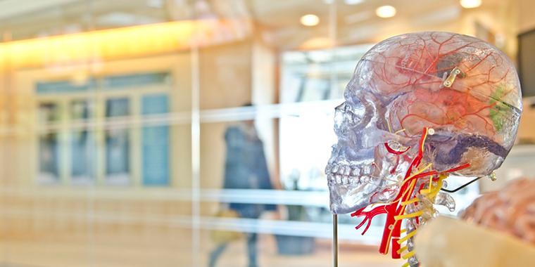 An image of a transparent human skull